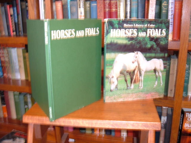 Image for Horses and Foals