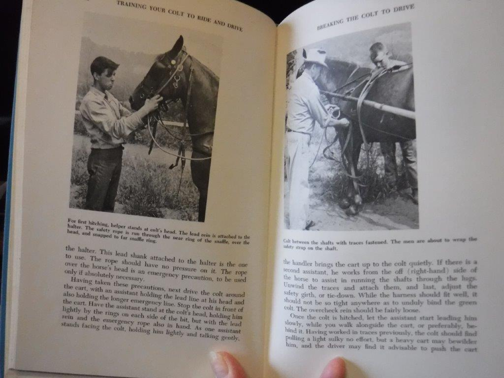 Image for Training Your Colt to Ride and Drive - A Complete Guide to Training Colts of All Breeds to Ride and Drive for Pleasure or Show, Wwritten Especially for the Amateur Horseman